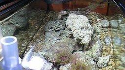 Смотреть Кормёжка и общение с домашним осьминогом