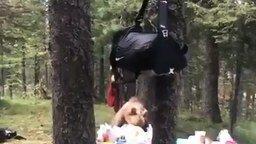 Смотреть Медведь пришёл в гости?