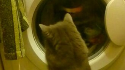 Смотреть Кошка стирает вместе с машинкой