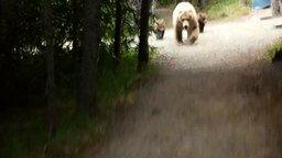 Встреча с семьёй медведей смотреть видео прикол - 2:21