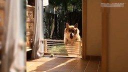 Смотреть Смешные и нежные моменты с животными