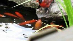 Птицы кормят рыбок