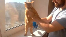 Смотреть Смешные танцующие коты и кошки