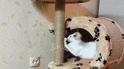 Смотреть Чудные коты и кошки в сборке