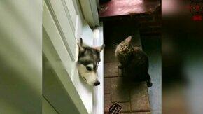 Пёс ошибся дверью смотреть видео прикол - 0:10