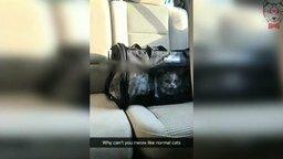 Смотреть Кот странно мяукает