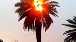 Смотреть Самовозгорание пальмы