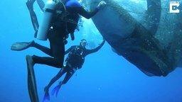 Смотреть Освобождение китовых акул из сетей