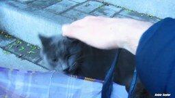 Игривый уличный котик смотреть видео прикол - 4:20