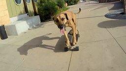 Смотреть Чудной пёс на скейте