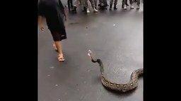 Смотреть Маленький укротитель змеи