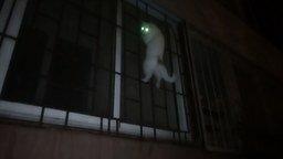 Смотреть Дождь - лучшая мотивация для кошек