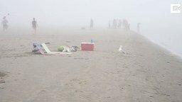 Смотреть Дерзкий воришка на пляже
