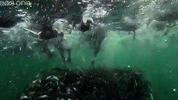 Морская жизнь вблизи смотреть видео прикол - 1:15