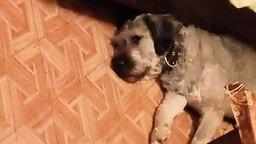 Смотреть Что снится собаке?