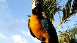 Смотреть Венесуэльские голуби