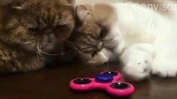 Грустные коты перед спиннером смотреть видео прикол - 0:31