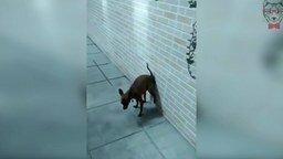 Смотреть Накакал на стену