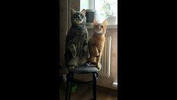 Кот, ты любишь кошку?