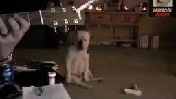 Самый заядлый пёс-рокер