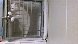 Кошачий побег из клетки смотреть видео прикол - 0:24