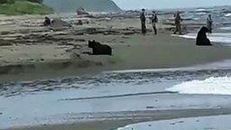 Смотреть В Долинском районе медведь рыбачил рядом с людьми
