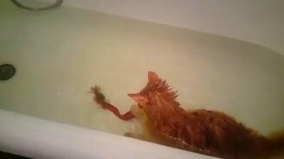 Смотреть Кот в ванне и лента