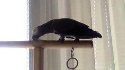 Смотреть Очень разговорчивый попугай