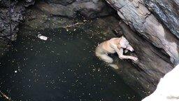 Смотреть Спасение пса из колодца