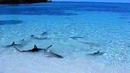 Смотреть Акулы возле берега