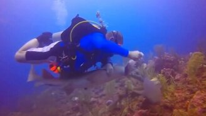 Смотреть Акула отнимает добычу у водолаза