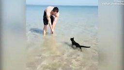 Кот, который любит море смотреть видео прикол - 0:59