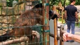 Берегись обезьян смотреть видео прикол - 0:12