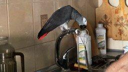 Смотреть Болтливый попугай