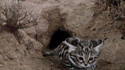 Смотреть Самая смертоносная кошка
