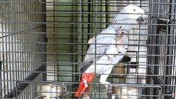 Попугай-стихоплёт смотреть видео прикол - 0:30