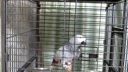 Смотреть Попугай поёт песню