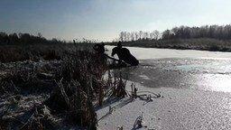 Смотреть Спасли лося изо льда
