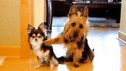 Смотреть Приколы с симпатичными собачками