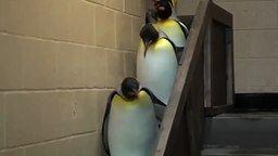 Сюрприз в пингвиньей очереди смотреть видео прикол - 0:45