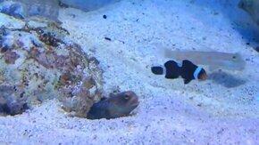 Рыба-бесстыдница смотреть видео прикол - 1:11