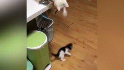 Кот завёл котёнка