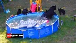 Медведи в бассейне смотреть видео прикол - 0:57