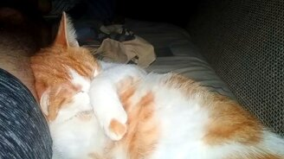 Кот храпит во сне смотреть видео прикол - 0:15