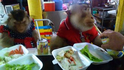 Смотреть Обезьянки обедают