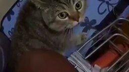Кот что-то разъясняет
