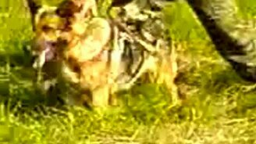 Берегись служебной собаки смотреть видео прикол - 1:07