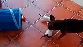 Собака-нянька смотреть видео прикол - 0:20
