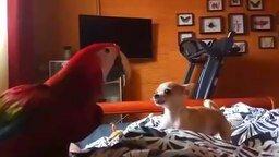 Игры собачонки и попугая смотреть видео прикол - 3:28