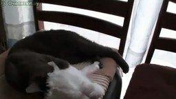 Кошка одевается смотреть видео прикол - 0:25